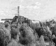trees-chernopbyl
